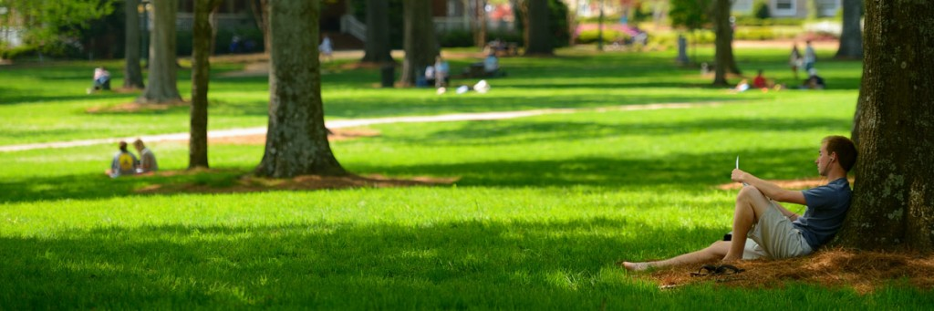 Green grass and shade in the Grove.